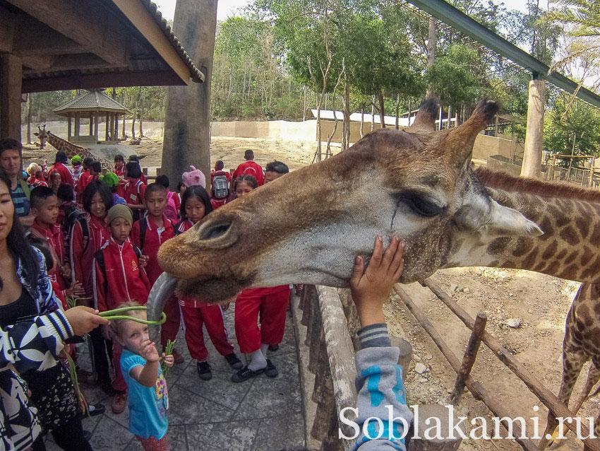 Зоопарк в Чиангмае: фото, видео, карта, отзывы