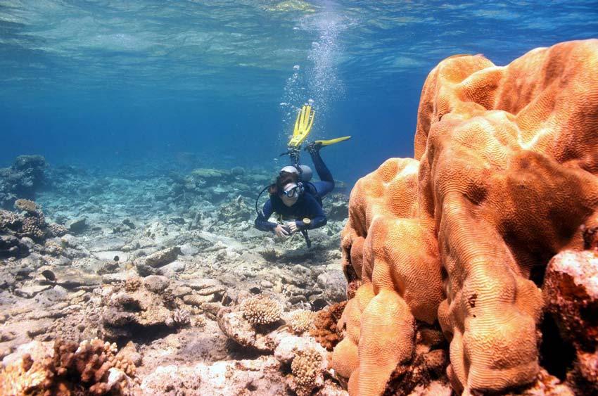 Подводные джунгли Красного моря